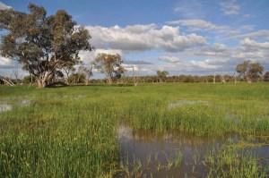 Gwydir Wetlands