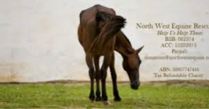 North west equine rescue