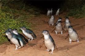Penguins 2