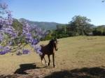 Jenn J Mcleod Horse 1